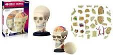 F0980 4D Puzzle Human organ Anatomy head skull Model 3D CutAway NEW