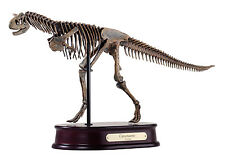 Carnotaurus Dinosaur Skeleton Model Replica 1:20 Scale DinoStoreus
