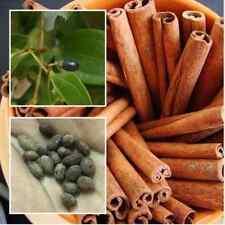 5 pcs cinnamon seeds, Spices-Seasoning-Herb seeds