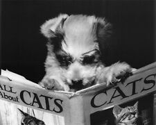 CUTE PUPPY - ALL ABOUT CATS READING POSTER - 16x20 - DOG 16039
