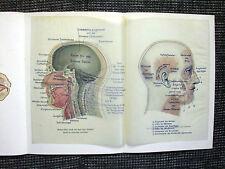 Kopf vergleichende Anatomie Mensch und Gorilla FARBDRUCK von 1903 Schädel skull