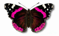 24 x Stunning PINK ADMIRAL Butterflies Edible Decorations Cup Cake Toppers Rice