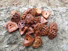 lot of 25 WALNUT Shell Pieces For Beading Jewelry Design Stringing Nature CRAFTS
