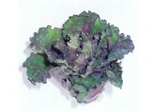 NEW VEGETABLE Petit Posy FLOWER SPROUT 15 Professional seeds  BRUSSEL KALE CROSS