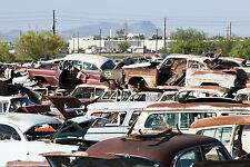 1950s junk cars in salvage yard 8 x 10 Photograph