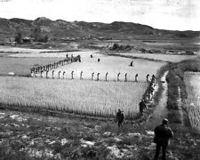 New 8x10 Korean War Photo: North Korean Prisoners March Across Rice Paddy, 1950
