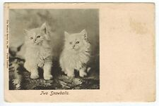 "Antique Vintage Cat White Kitten Real Photo Postcard  DB 1904  ""Two Snowballs"""