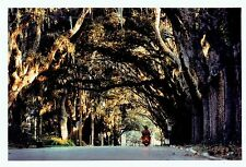 1995 Vintage COLOR Photo by MCANDREWS Magnolia Street in St. Augustine Florida