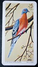 Passenger Pigeon          Illustrated Card   VGC
