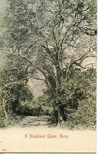 POSTCARD / BRITISH COLONIES / SOUTH AFRICA / A WOODLAND GLADE NATAL