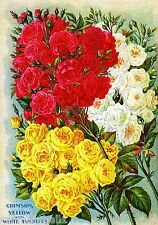 White Rambler Roses Vintage Flowers Seed Packet Catalogue Advertisement Poster
