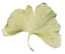 Large Ginkgo Brooch Pin by Michael Michaud for Silver Seasons