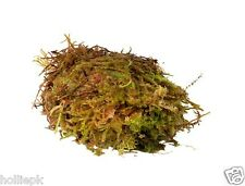 LIVE SPHAGNUM MOSS REPTILE AMPHIBIANS & INVERTS HELPS HUMIDITY 1 KILO