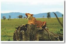 Lioness in Tanzania - NEW Animal Wildlife POSTER