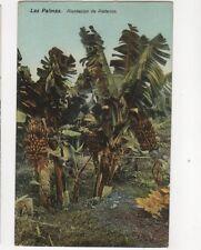 La Palmas Plantacion De Platanos Spain Vintage Postcard 061b