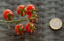 ☺50 graines tomate porte greffe bio petit moineau 2016. Tomato grafting seeds