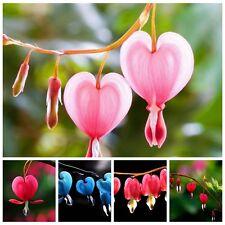 New 10X Lantern Lantern Bleeding Heart Seeds Flower Plant Garden Multi-Color