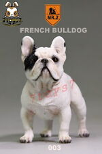 Mr. Z 1/6 French Bulldog_ 003 Dog w/ collar Set _Animal Now ZZ047M