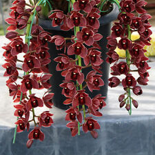 100PCS Chinese Cymbidium Orchid Flower Seeds Indoor Potted Home Window Decor