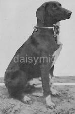 German Army Dog With Iron Cross World War 1 7x5 Inch Reprint Photo