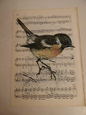 Vintage music sheet printed bird picture, wall art, antique, Stonechat