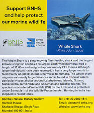 RSPB Pin Badge | Whaleshark | International India BL Partner [00867]