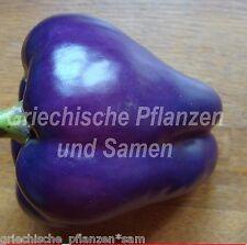 purple Bell Paprika lila blau 10 Samen sehr ertragreich * Balkon Kübel im Haus