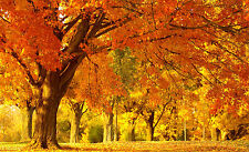 Framed Print - Sunny Autumn Wooded Area (Picture Poster Forest Park Trees Art)