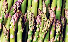 35 Graines non traitées ASPERGE VERTE Connover's Colossal - très productive !