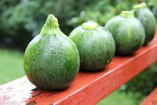 Round Zucchini Squash Heirloom (Open Pollinated) bush-100 Seeds.Squash Summer !