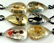 12 Pendant Real Mixed Insect Taxidermy Resin Fashion Scorpion Ant Jewelry