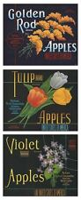"RARE LOT OF (3) 1940S ""TULIP~GOLDEN ROD~VIOLET BRAND"" APPLE BOX LABELS YAKIMA WA"
