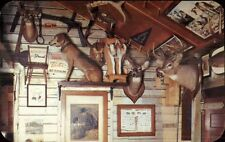 Taxidermy - Deer Dog Teich's Trading Post Adirondacks Eagle Bay NY PC #2