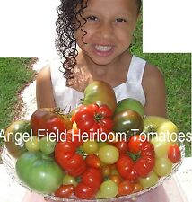 "200 Mixed Heirloom ""Cherry Tomato Wholesale Seed Only & Free Peppers Seeds"""