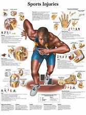 A3 Medical Poster – Sports Injuries (Text Book Anatomy Pathology Doctor Physio)