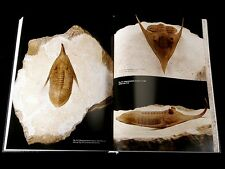 The book about Russian Ordovician trilobites
