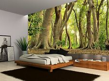 Big Trees Magic Green Forest Nature Wall Mural Photo Wallpaper GIANT WALL DECOR