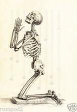 Art Print/Poster/Vintage/Praying Skeleton  C. 1733/13x19 inch