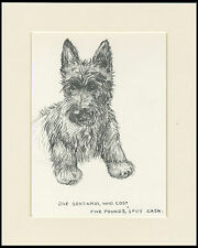 SCOTTISH TERRIER PUP LOVELY OLD 1930'S DOG SKETCH PRINT by KF BARKER MOUNTED