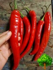 50 SEEDS RED THAI CHILI PEPPER LONG LITTLE SPICY ORGANIC HEIRLOOM FOR PLANT