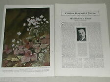 1932 Canadian article about Wild Flowers of Canada