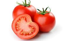 Un 0.2g (aproximadamente .30) Semillas de Tomate Floradade Multiuso popular Variedad Americana