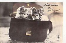 B81339 cubs in bag nous voulons etre du voyage  cat chat front/back image