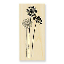 Agapanthus Flower Rubber Stamp Wood Mounted Large Stampendous N152 Made in USA