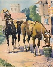 Old Vintage KENNEDY Art Print Farm Animal Equestrian Horse Black Chestnut Horse