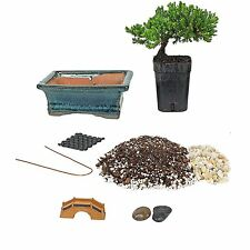 Bonsai Tree Starter Kit, Complete Do-It-Yourself Kit with 2 Year Old Petite Japa
