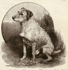 "IRISH TERRIER DOG ANTIQUE ART PRINT ENGRAVING ""Red Paddy - A Dog's Tale"" 1890"