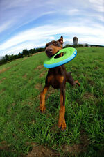 Chuckit Zipflight Dog Frisbee Toy, Medium 21cm