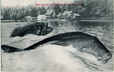 Prelinen - EXAGGERATION giant fish AUBURN Pub Co. INDIANA Vintage Postcard
