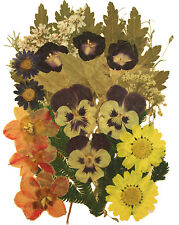 Pressed Flowers, Morning Glory Daffodils Daisy Alyssum Foliage